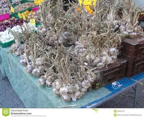 斑鸠店大蒜