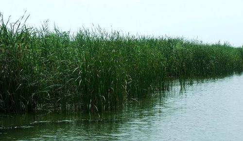 洪泽湖藕粉