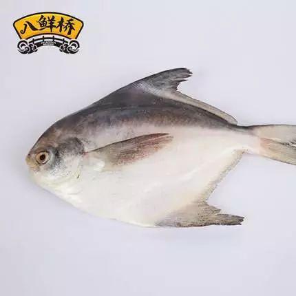 东海生态鱼