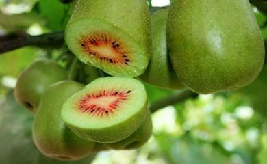 太浮中华猕猴桃